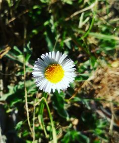 Blossom Mis fotos en Instagram   #misfotos #park #flower