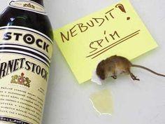 Myška s kocovinou | Vtipné obrázky - obrázky.vysmátej.cz