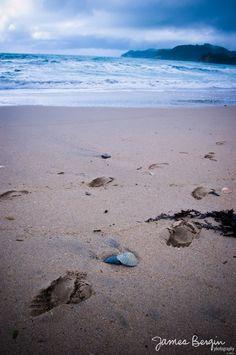 Waipu Cove beach