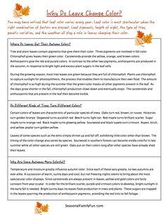 Triple Beam Balance Worksheet lesson plan Pinterest