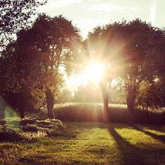 ... in #plesching geht die #sonne auf!  #goodmorning #linz #igerslinz #linzpictures #instaweather #wetter #morgens #sunny #upperaustria #oö #potd #canon #team #safetheplanet #nature #wildlife #pleschingersee #lake #mood #moments #lifestyle #training