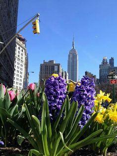 Spring in NYC April 2014