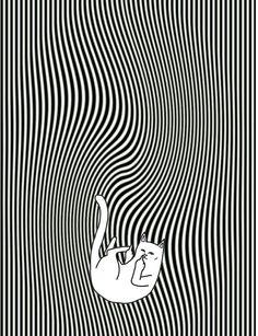#ripndip #middle #finger #cat #wallpaper #iphone