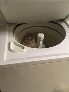 My kitty disappeared for over an hour. Finally found her here. by MemeShaman cats kitten catsonweb cute adorable funny sleepy animals nature kitty cutie ca