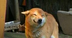 And maybe the most famous smiling shiba inu of all … | Community Post: Shiba Inus: The Happiest Dog In All The Land