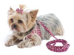 Our Official Ultrasuede Dog Leash by The Dog Squad - Pink Leopard is the perfect product for almost any pet at an exceptional value! Dog Stroller, Knit Dog Sweater, Designer Dog Collars, Pink Cheetah, Dog Boutique, Dog Teeth, Pet Travel, Pet Life, Dog Harness