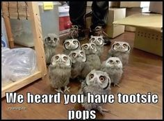 Where are my pet owls?!