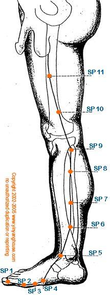 (SP) Spleen Meridian - Graphic