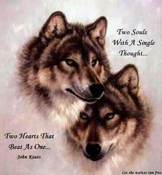 Find wolf figurines, wolf t shirts, wolf art and wolf pictures at EverythingWolf. Great wolf and dog lover gifts, Popular and unique items. Wolf Images, Wolf Photos, Wolf Pictures, Beautiful Creatures, Animals Beautiful, Beautiful Things, Beautiful Images, Lone Wolf Quotes, Wolf Spirit