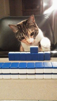 """""""anything that is not nailed down is a cat toy."""" --Anonymous. Sad thing is the cat is winning."""