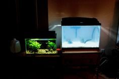 Cloudy aquarium water | Causes, solutions & prevention