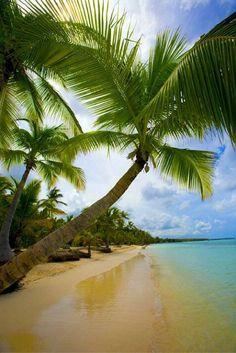 Wil jij vlak voor kerst nog even genieten van zon, zee en strand zodat je met een heerlijk tintje jouw kerstoutfit kunt dragen? Ga dan met deze fantastische deal naar de Dominicaanse Republiek!   Met wie ga jij naar dit paradijs? https://ticketspy.nl/deals/dominicaanse-republiek-knaller-ticket-35-hotel-inclusive-va-e549/