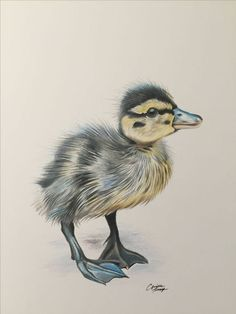 Duckling drawing in colored pencil done by Aprille Thompson www. Bird Pencil Drawing, Duck Drawing, Pencil Drawings Of Flowers, Color Pencil Art, Bird Drawings, Realistic Drawings, Art Drawings Sketches, Cartoon Drawings, Easy Drawings