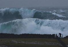 Shetlands. This just terrifies me.