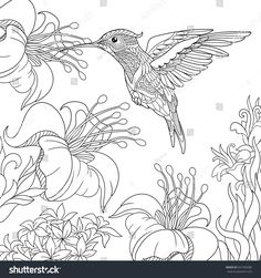 Coloring page of hummingbird and hibiscus flowers. Freehand sketch drawing for adult antistress colouring book with doodle and zentangle elements.