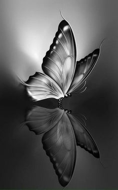 i Phone dark wallpapers Pencil Drawings Of Flowers, Cool Art Drawings, Pencil Art Drawings, Art Drawings Sketches, Animal Drawings, Pencil Sketch Images, Butterfly Sketch, Butterfly Painting, Butterfly Art