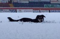 Aquila tra la neve al Gran Sasso, foto postata da Morgia sul suo profilo