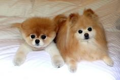boo...the cutest dog in the world - and his friend buddy. they make me smile :~)