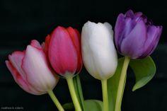 Happy Mother's Day #Outlander fans. Moms make the world go 'round @Outlander_Starz #potd