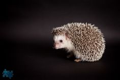 Image result for hedgehog photography