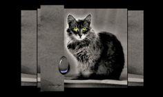 Portrait einer Katze in schwarz-weiß mit leuchtenden Augen