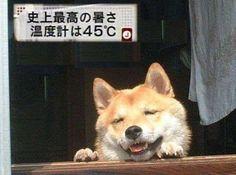 気温 暑い 熊谷 秩父 天気予報に関連した画像-01