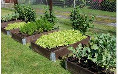 grønnsakshagen - Google-søk