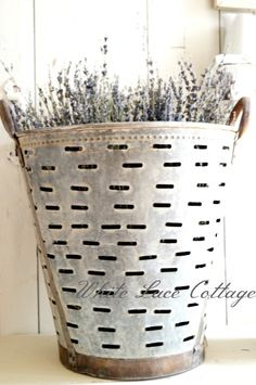 An Olive Bucket and Lavender - White Lace Cottage
