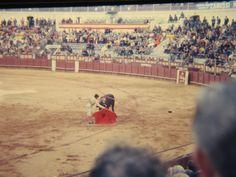 Bull fights in Spain