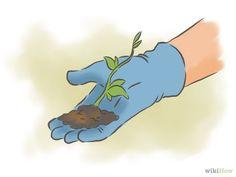 Imagem intitulada Grow Passion Fruit Step 9