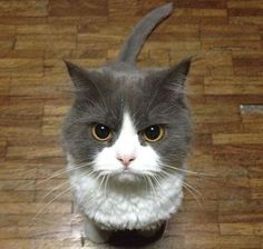 I'm a cat and I'm angry - Imgur