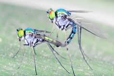 50 Shades of WRONG: Disturbing Insect Sex-- Oh Humans. You think you're getting freaky? You know nothing.