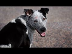How To Treat Hot Spots On A Dog - A Step-by-Step Video Guide - Top Dog Tips