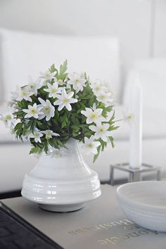 With the amazing weather we have had lately, we have a lot of Wood Anemones in the woods nearby. So the weekend bouquet is hand picked and free of charg...