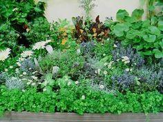 野菜の丈に高低差をつけると、立体感が出て、とても見栄えがします。