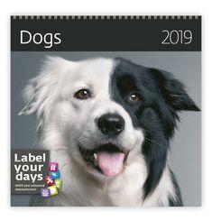 Nástěnný kalendář LP DOGS 2019 Lp, Dogs, Animals, Color, Animales, Animaux, Doggies, Colour, Animal
