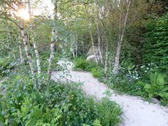 A hidden grove of birches behind mulberry tree? Veering to informality here, so maybe not!