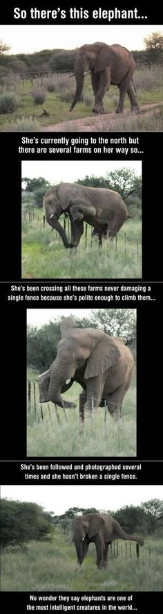 No Wonder Why Elephants Are One Of The Most Intelligent Creatures In The World--If only humans were so considerate of their animal neighbors' homes. by proteamundi