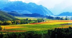 Robertson south africa - Google Search