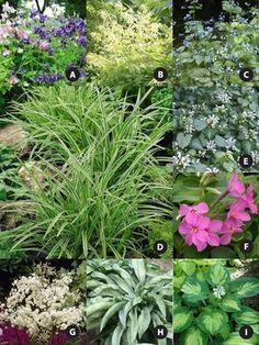 Shade Garden: Perennials for shade pdf plan for a x plot Outdoor Plants, Outdoor Gardens, Gardening For Dummies, Gardening Tips, Shade Garden Plants, Shade Flowers, Shade Perennials, Woodland Garden, Landscaping Plants