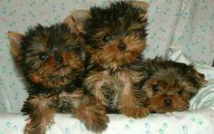 Cute dogs friends