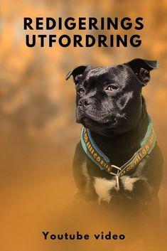 Ann Charlott utfordret meg til å redigere hennes bilde av Taake. Det var litt jobb å redde bildet. Problemer med bildet: Bånd er ikke tatt av For stor dybdeskarphet For kort avstand mellom hund og bakgrunn Ingen interessant forgrunn #editingchallenge #redigere bilde #hundefotograf Family Dogs, Henna, Photoshop, Hennas