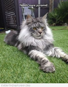 1000 images about my favorite cats on pinterest  have a