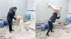 Petition: Petition: Punish Owner Who Beat Dog To Death For Losing Race!