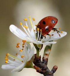 Ladybug, headfirst!