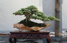 nicholasjosephjaquez:  I will have a Bonsai tree in my room. :)  VERY cool Bonsai I found on Tumblr.. Loving the pot!