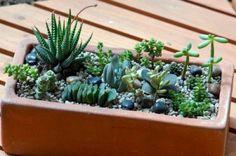 rośliny w doniczce