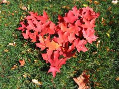 Fall Leaf Love by eclectic_chica, via Flickr