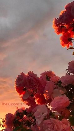 Pink Flower aesthetic and Ferris Wheel in beautiful garden. Pink Flower aesthetic and Ferris Wheel in beautiful garden. Aesthetic Pastel Wallpaper, Aesthetic Backgrounds, Aesthetic Wallpapers, Nature Aesthetic, Flower Aesthetic, Aesthetic Vintage, Aesthetic Plants, Iphone Background Wallpaper, Nature Wallpaper