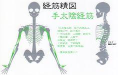 手太陰経筋. Contact Information http://www.kup4u.com/company/infinityflexibility http://infinityflexibility.com/wp/